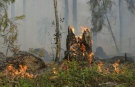 Imagem ilustrativa do conteúdo [Atividade 3] Amazônia